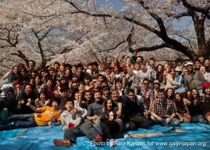 hanami - sakura at Yoyogi PArk Tokyo with Go Go nihon Japan - go go nihon