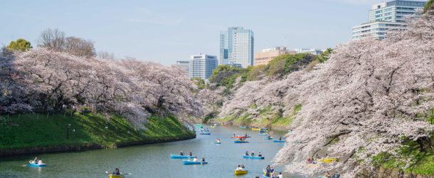 Sakura et Hanami: spots et conseils pour les cerisiers en fleurs au Japon