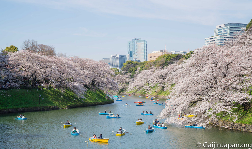 sakura et hanami  spots et conseils pour les cerisiers en fleurs au japon