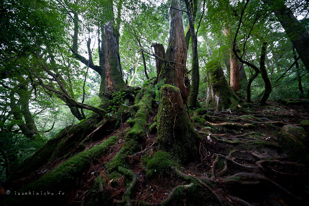 Yakushima - photo par Issekinicho