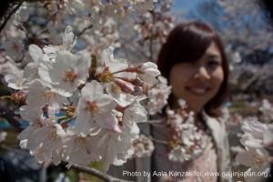 partir au Japon pour voir les Sakura