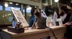 Neko Kissa, café à chats au Japon