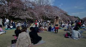 Parc Shinjuku Gyoen, dans le coeur de la capitale