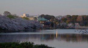 Parc Ueno à Tokyo, le parc du quartier populaire