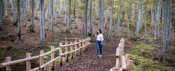 Bijin Bayashi, la forêt des belles filles à Tokamachi