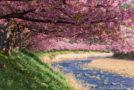 Kawazu-zakura, le festival des sakura précoces